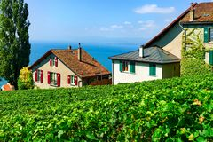 Lavaux, Switzerland - August 30, 2016: Chalets on Vineyard Terrace hiking trail of Lavaux, Lake Geneva and Swiss mountains, Lavaux. Oron district, Switzerland royalty free stock images