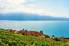 Lavaux, Switzerland - August 30, 2016: Swiss village at Lavaux Vineyard Terrace hiking trail, Lake Geneva and Swiss mountains,. Lavaux-Oron district of stock photography