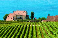 Lavaux, Switzerland - August 30, 2016: Lavaux Vineyard Terraces hiking trail, Lake Geneva, Lavaux-Oron district, Switzerland. Lavaux, Switzerland - August 30 stock image