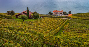 Lavaux, Switzerland - Vineyard Terraces I Royalty Free Stock Images