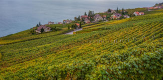 Lavaux, Switzerland - Vineyard Terraces II Stock Images
