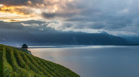 Lavaux, Switzerland - Vineyard Terraces IV Royalty Free Stock Photography