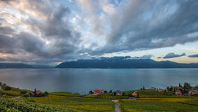 Lavaux, Szwajcaria - Winnica Tarasuje V Fotografia Royalty Free