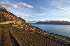 Lavaux, terrasses de vignoble, Suisse Photo libre de droits