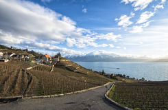 Lavaux, Vineyard Terraces, Switzerland Stock Image