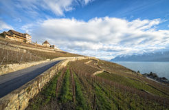 Lavaux, Vineyard Terraces, Switzerland Royalty Free Stock Photos