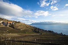 Lavaux, Vineyard Terraces, Switzerland Royalty Free Stock Images