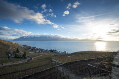 Lavaux, Vineyard Terraces, Switzerland royalty free stock image