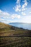 Lavaux, Vineyard Terraces, Switzerland Stock Photography