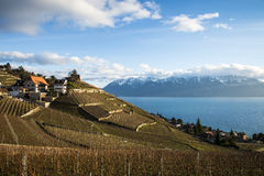 Lavaux, Vineyard Terraces, Switzerland stock photo