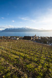 Lavaux, Vineyard Terraces, Switzerland stock images