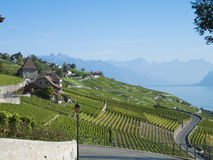 Lavaux vineyards (1). Eastward view on the Lavaux vineyards, early autumn royalty free stock photos