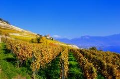 Lavaux Vineyards. The Lavaux Vineyards on Lake Geneva in Fall Royalty Free Stock Photo