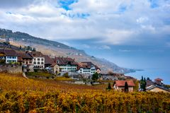 The Lavaux vineyards in autumn color stock photo