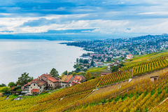 Lavaux vineyards. Beautiful view on Lavaux vineyards and the lake Geneva, Vaud, Switzerland, autumn royalty free stock images