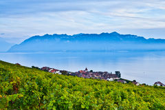 Lavaux Vineyards and Chablais Alps. Lavaux Vineyards facing Lake Geneva at the Vineyard Terraces (a UNESCO World Heritage Site) in Lavaux, Switzerland. The Stock Photo