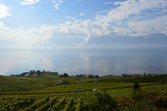 Lavaux Vineyards. Is a famous Wine in Switzerland, in Geneva lake on sunny slope, large vineyard overlapping, Geneva lake is all over the mountains and plains royalty free stock photos