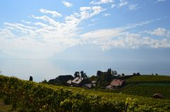 Lavaux Vineyards. Is a famous Wine in Switzerland, in Geneva lake on sunny slope, large vineyard overlapping, Geneva lake is all over the mountains and plains royalty free stock image