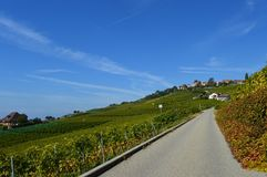 Lavaux Vineyards. Is a famous Wine in Switzerland, in Geneva lake on sunny slope, large vineyard overlapping, Geneva lake is all over the mountains and plains royalty free stock photography