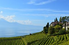 Lavaux Vineyards. Is a famous Wine in Switzerland, in Geneva lake on sunny slope, large vineyard overlapping, Geneva lake is all over the mountains and plains royalty free stock images