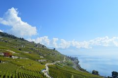 Lavaux Vineyards. Is a famous Wine in Switzerland, in Geneva lake on sunny slope, large vineyard overlapping, Geneva lake is all over the mountains and plains stock photo