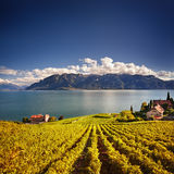 Lavaux vineyards Stock Image