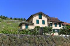 Lavaux vineyards on Lake Geneva, Switzerland Stock Photo