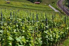 Lavaux vineyards on Lake Geneva, Switzerland Royalty Free Stock Image
