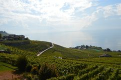 Lavaux Vineyards. Is a famous Wine in Switzerland, in Geneva lake on sunny slope, large vineyard overlapping, Geneva lake is all over the mountains and plains stock images