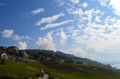 Lavaux Vineyards. Is a famous Wine in Switzerland, in Geneva lake on sunny slope, large vineyard overlapping, Geneva lake is all over the mountains and plains stock photography