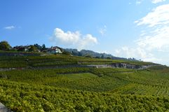 Lavaux Vineyards. Is a famous Wine in Switzerland, in Geneva lake on sunny slope, large vineyard overlapping, Geneva lake is all over the mountains and plains royalty free stock photo