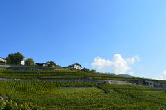 Lavaux Vineyards. Is a famous Wine in Switzerland, in Geneva lake on sunny slope, large vineyard overlapping, Geneva lake is all over the mountains and plains stock photos