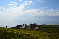 Lavaux Vineyards. Is a famous Wine in Switzerland, in Geneva lake on sunny slope, large vineyard overlapping, Geneva lake is all over the mountains and plains stock image