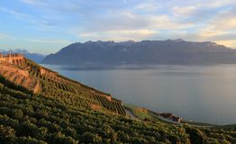 Lavaux vineyards, Switzerland Stock Image