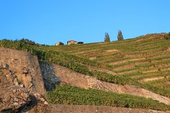 Lavaux vineyards, Switzerland Royalty Free Stock Photos