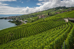 Lavaux Vineyards, Switzerland Stock Images