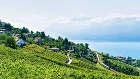 Lavaux-Weinberg-Terrasse von der Schweiz Stockfotos