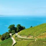 Lavaux-Weinberg-Terrassenweg von der Schweiz Lizenzfreies Stockbild