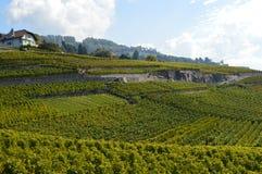 Lavaux-Weinberge Lizenzfreies Stockbild