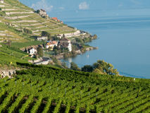 Lavaux Weinberge (5) stockfoto