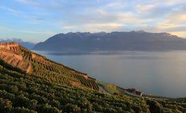 Lavaux Weinberge, die Schweiz Stockbild