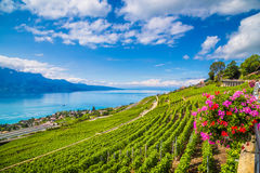 Lavaux wine region with Lake Geneva, Switzerland. Beautiful scenery with vineyard terraces in famous Lavaux wine region, UNESCO World Heritage Site since 2007 Stock Image