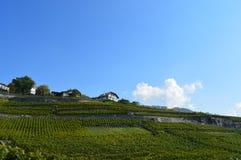 Lavaux winnicy Zdjęcia Stock