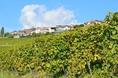 Lavaux winnicy Zdjęcie Royalty Free