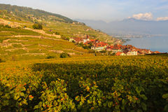 Lavaux winnicy Obraz Stock