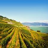 Lavaux winnicy blisko Lemańskiego jeziora Fotografia Stock
