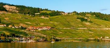 Lavaux winnicy na Jeziornym Genewa Fotografia Stock