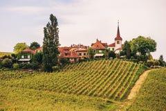 Lavaux winnicy przy zmierzchem Zdjęcia Stock