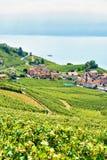 Lavaux winnicy trasy Tarasowy wycieczkuje szwajcar Zdjęcie Royalty Free