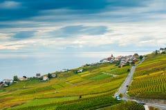 Lavaux winnicy w jesieni Zdjęcie Royalty Free